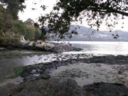Praia Rio Castro